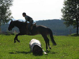 Das Vielseitigkeitsreiten setzt sich aus drei Teilprüfungen der Disziplinen Dressur, Springen und Geländereiten innerhalb eines Wettbewerbes zusammen. Die Prüfung hat einen militärischen Ursprung. Bei der Vielseitigkeitsprüfung benötigen Pferd und Reiter oftmals sehr viel Mut, Vertrauen, Ausdauer und Flexibilität. Eine besondere Rolle spielen eine oder mehrere Verfassungsprüfung(en) des Pferdes zur Vermeidung von Überlastung. Ab der Geländeprüfung der Klasse E sind die Strecken über einen Kilometer lang, deshalb ist auch die Ausdauer des Pferdes und des Reiters gefragt.