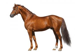 Neue Pferde Für Stefanie Bistan Und Cian Ou0027Connor Reiten Direct
