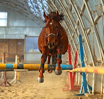gangarten-pferd