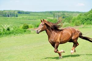 kräuter-für-pferde