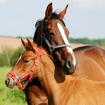 pferde-futter-hersteller