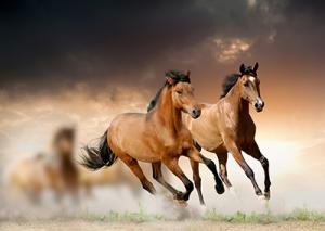 vitamin-mineral-futter-pferde