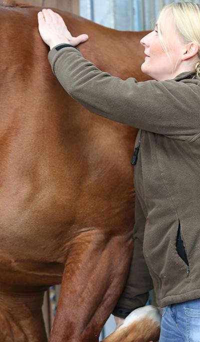 Reitersprechstunde--Therapeutische-Begutachtung-des-Pferdes