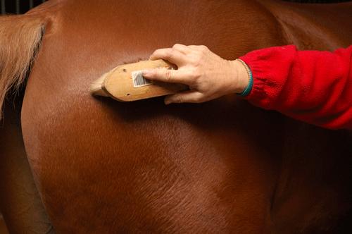 pferde-richtig-putzen_01