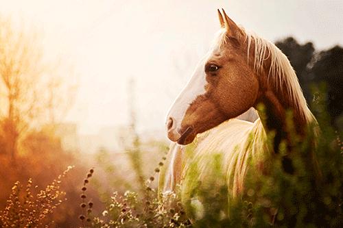 reiterabzeichen-prüfung-pferde