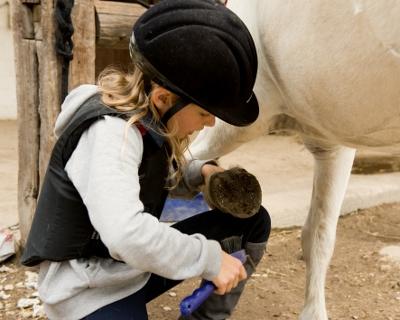 © Shestakoff / Fotolia.com - ):        Ein freundlicher Charakter des Pferdes ist nicht nur unter                                                  dem Sattel gefragt, sondern auch im Umgang