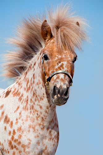 Zahnpflege-für-Pferde