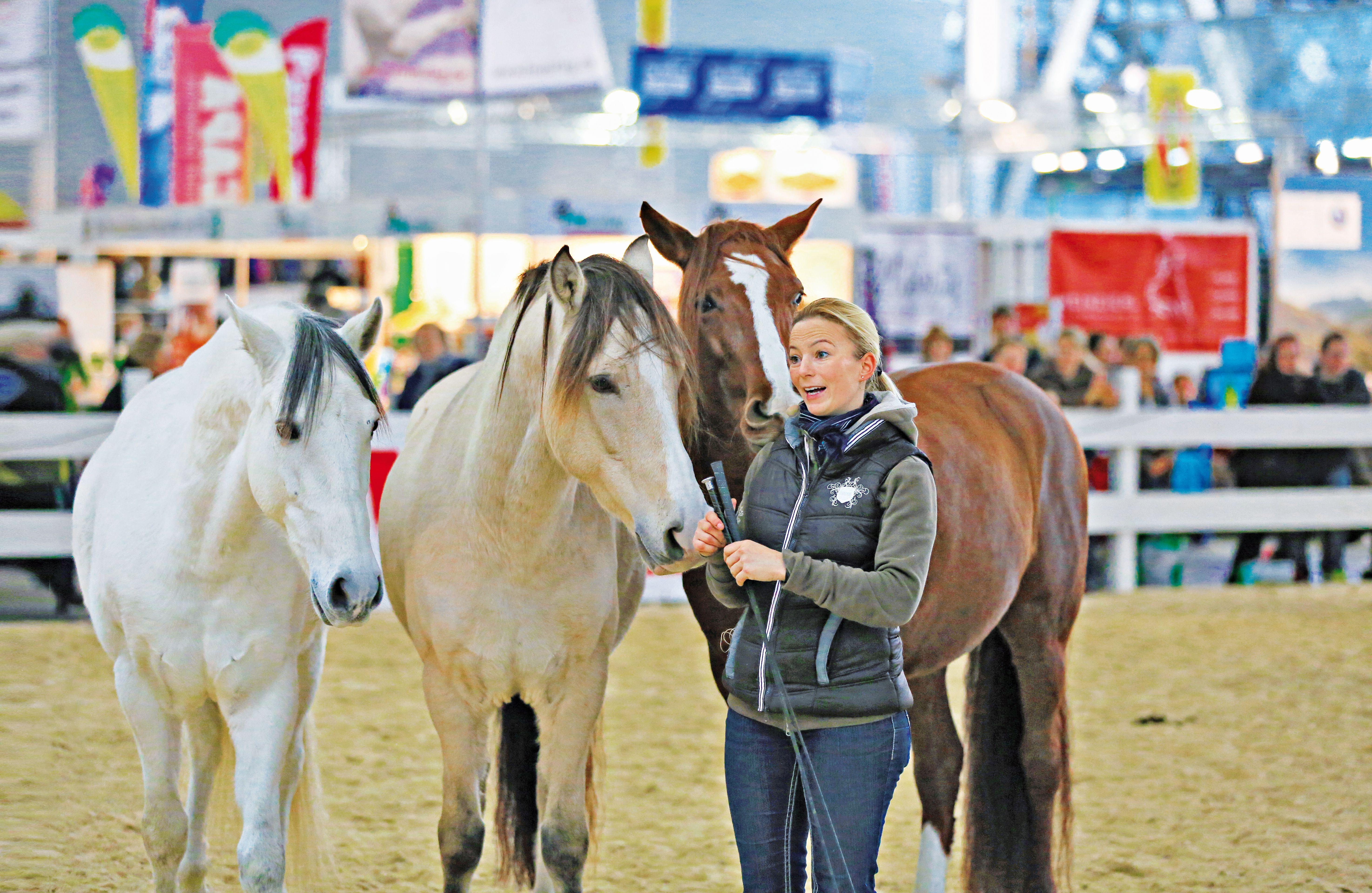 459b51c0754f2 Pferd   Jagd - Messe-Highlight der internationalen Pferdebranche ...